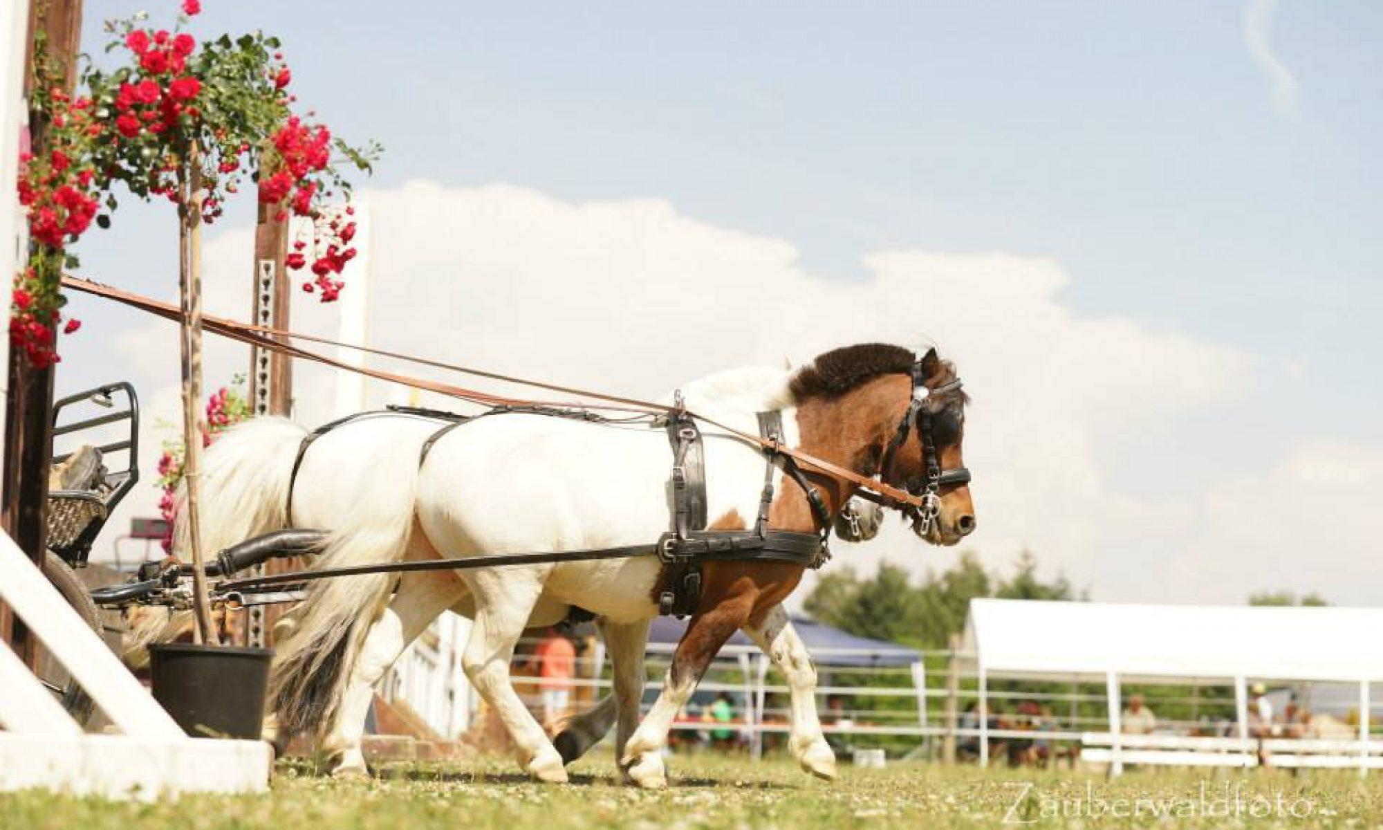 Pferdesportverein Oberviechtach
